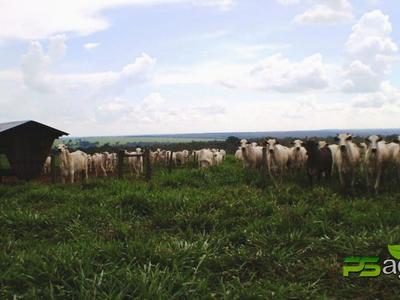 Zona Rural, Goiânia - GO
