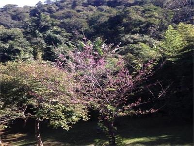 Pinheiral Ii, Atibaia - SP