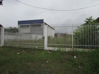 Hauer, Curitiba - PR